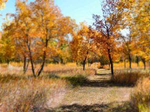 autumn-colours-danielson-park-17-sept-5