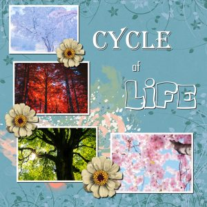 cycle-of-life