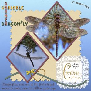 darner-variable-dragonfly-female-1