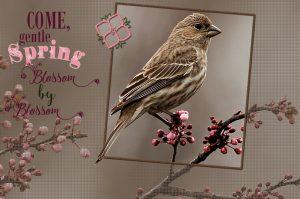 house-sparrow-female-framed-and-text