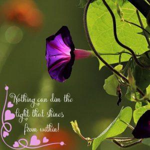 morning-glory-flower-morning-light-july-20