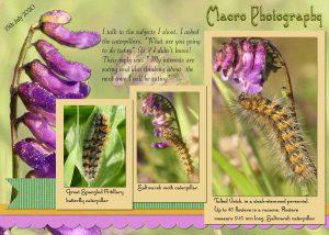 quote-caterpillar