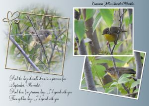 song-lyrcs-warbler-common-yellow-throated