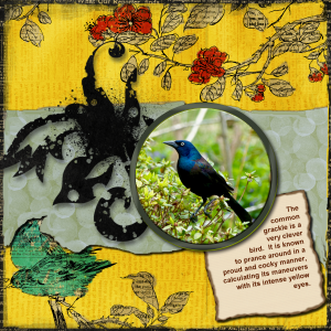 grackle-layout-reduced-2
