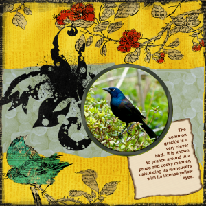 grackle-layout-reduced