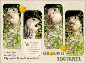 quote-ground-squirrel-a