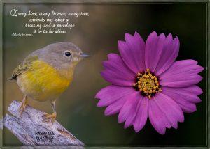 quote-warbler-nashville-flower