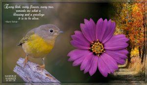 quote-warbler-nashville-flower-text