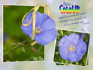 quote-wild-flax-2