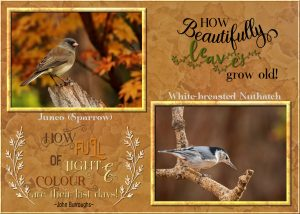 autumn-last-of-birds-and-colours-1