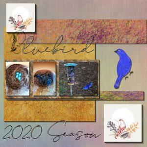 bluebird-600-2