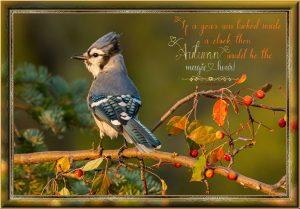 bue-jay-autumn-colours-framed