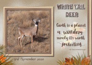 deer-page