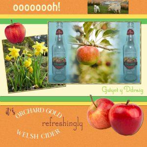 orchard-gold-cider