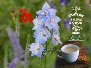 quote-tea-or-coffee-in-the-garden-2