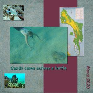 turtle-adventure600