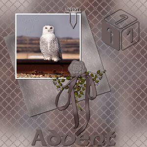 advent-day-1-snowy-owl