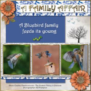a-family-affair_600-1-2