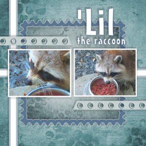 lil-the-raccoon