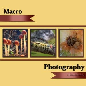 macrophotos-sm
