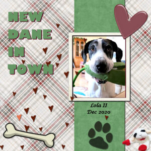new-dane-in-town_600