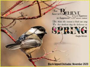 spring-text-chickadee-page
