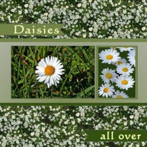daisies_allover_w