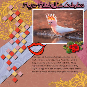 major-mitchells-cockatoo-resized