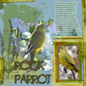 rock-parrot-resized