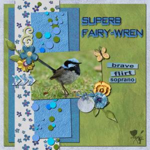 superb-fairy-wren-resized