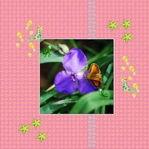 vlinder-rups-klein
