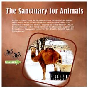 camel-farm_scaled