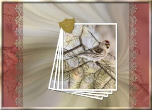 red-poll-finch-colour-paperclip-challenges