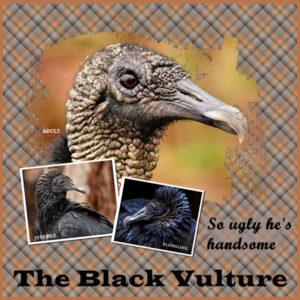 black-vultures-scaled-2