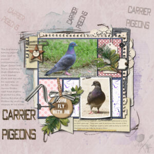 carrier-pigeons-resized-1