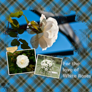 for-the-love-of-white-roses-resized