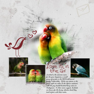 love-is-in-the-air-resized-2