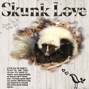 skunk-love_scaled