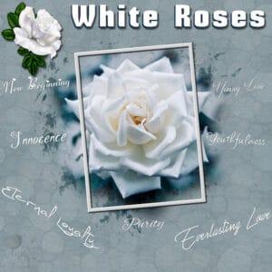 white-roses-resized