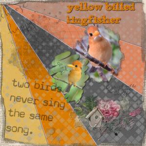 yellow-billed-kingfisher-resized