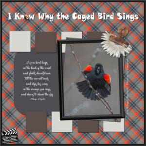concentration-red-winged-blackbird-lesson-5