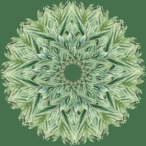 mandala-evergreen-sm