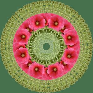 mandala-pink-poppy-2-sm