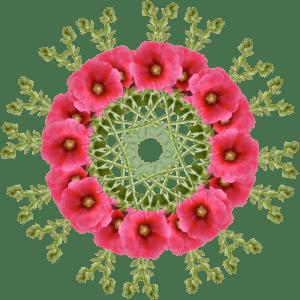 mandala-pink-poppy-sm