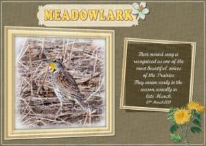 meadowlark-28-march-2021