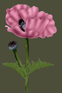 poppy-wo-sgh-26-03-2021