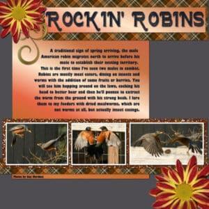 rockin-robin_600