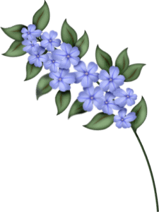 sgh-blue-blossom-spray-31-03-2021