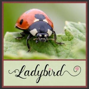 day-1-ladybird-1-3