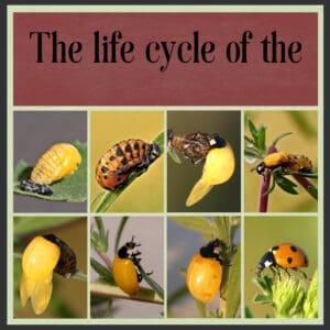 day-1-ladybird-2-2